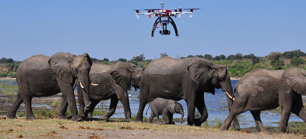 drone-elephant-1